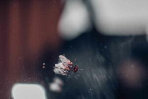 Nahaufnahme einer Fliege auf einer Scheibe